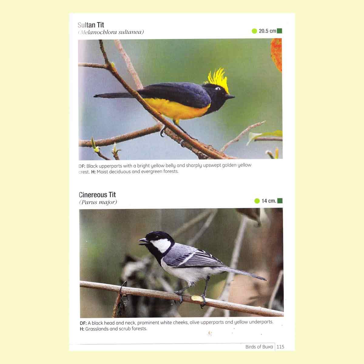 Birds of Buxa Tiger Reserve